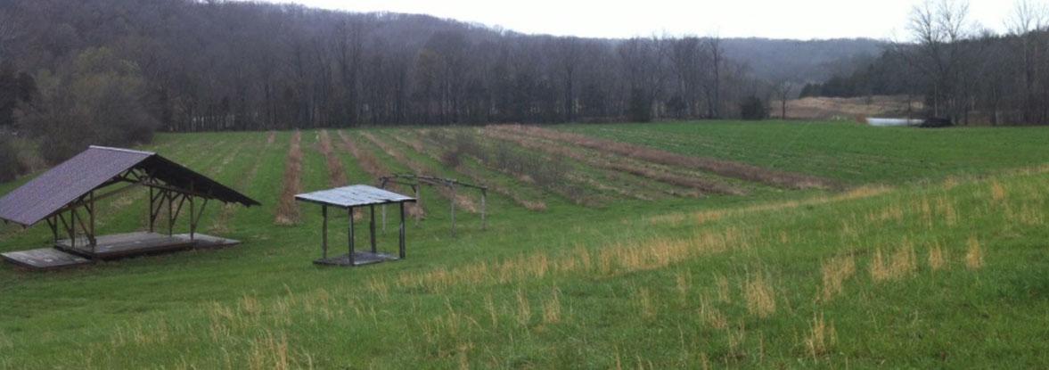 Elderberry Grower Resources